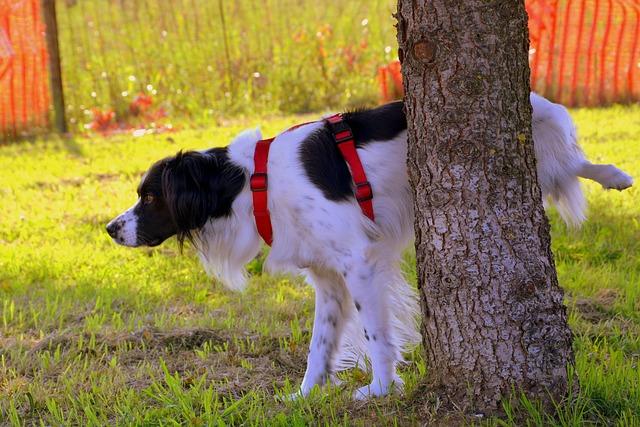 Naturalne repelenty na mocz psa