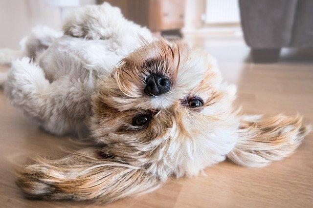 5 najbardziej czułych ras psów