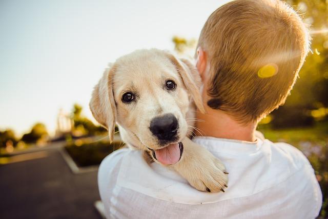 W jaki sposób psy komunikują nam, że nas kochają?